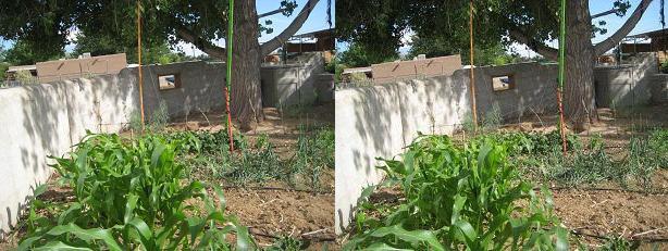 Garden stereograph